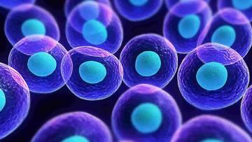 Ciclo de Seminarios: Células Madre, ¿qué son, qué hacen y qué podrían hacer?