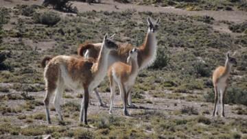 imagen que ilustra noticia Charla: Isótopos Estables y Arqueología al Oeste de Patagonia Continental
