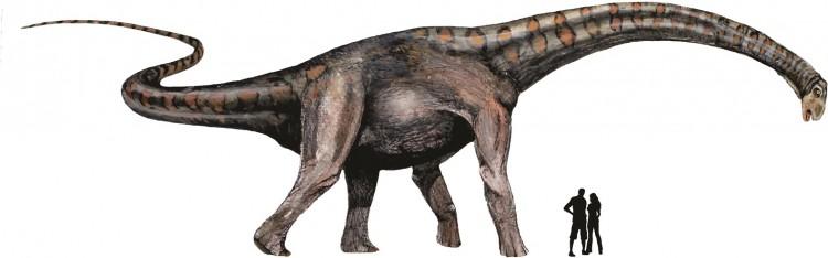 Un nuevo linaje de dinosaurios gigantes: los colossosaurios