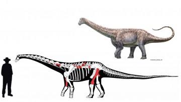 imagen que ilustra noticia Descubren uno de los últimos titanosaurios en el desierto de Atacama, Chile