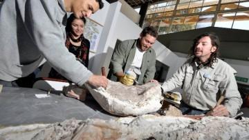 Nuevo traslado de Fósiles y Aniversario del  Laboratorio de Dinosaurios