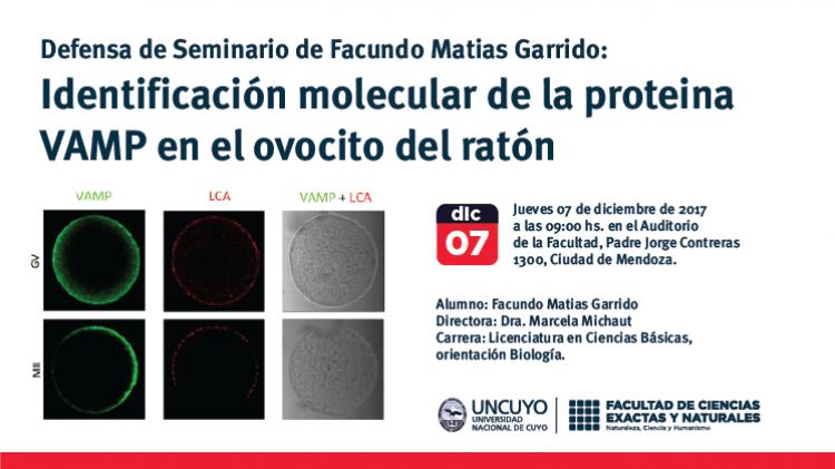 Defensa de Seminario de Facundo Matias Garrido: Identificación molecular de la proteina VAMP en el ovocito del ratón