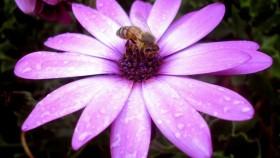 Los Andes: Los insectos: función e importancia para la vida