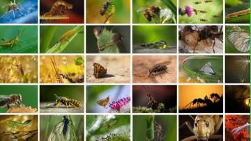 Materia electiva Diversidad y Evolución de Insecta