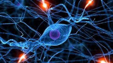 Nueva materia electiva: Neurobiología