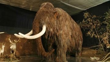 Discuten sobre la posible clonación de células de mamut