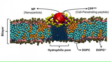 Charla: Transporte de nanopartículas a través de bio-membranas, a cargo del Dr. Mario del Pópolo
