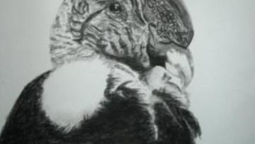 Aves de Mendoza: Exposición de dibujos en el ICB