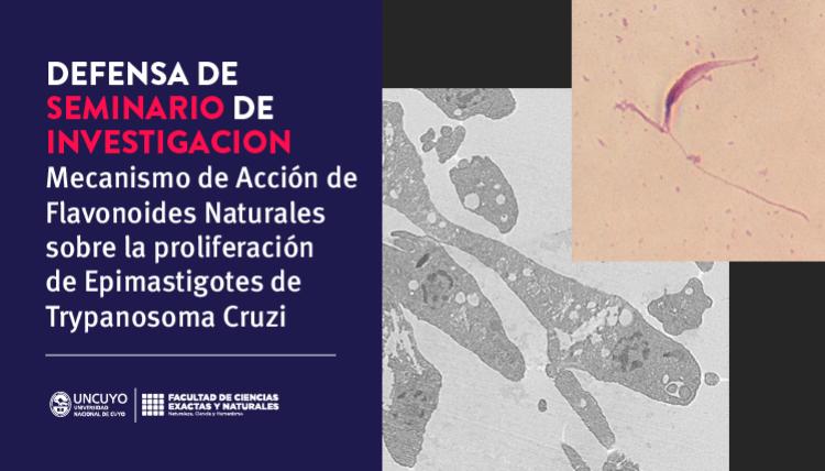 Defensa de seminario de Rocío Yasmin Cano: Mecanismo de acción de flavonoides naturales  sobre la proliferación de epimastigotes de Trypanosoma cruzi