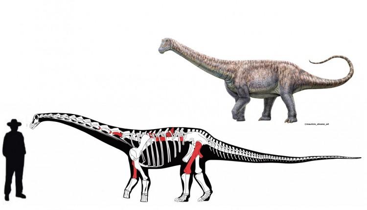 Descubren uno de los últimos titanosaurios en el desierto de Atacama, Chile