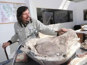 Están en la UNCuyo los fósiles de dinosaurios hallados en el Sur
